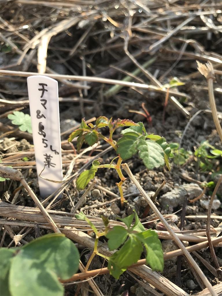 f:id:yaaninju-yui35:20210113165739j:image