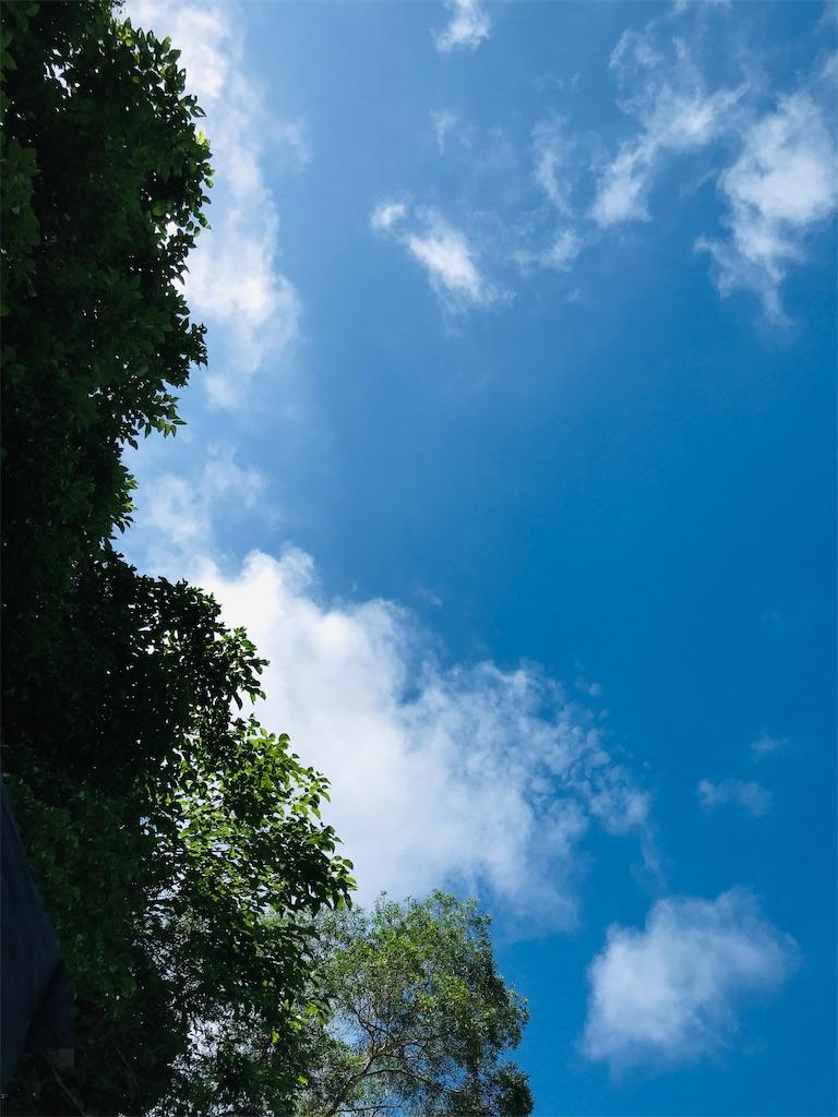 f:id:yaaninju-yui35:20210518164611j:image