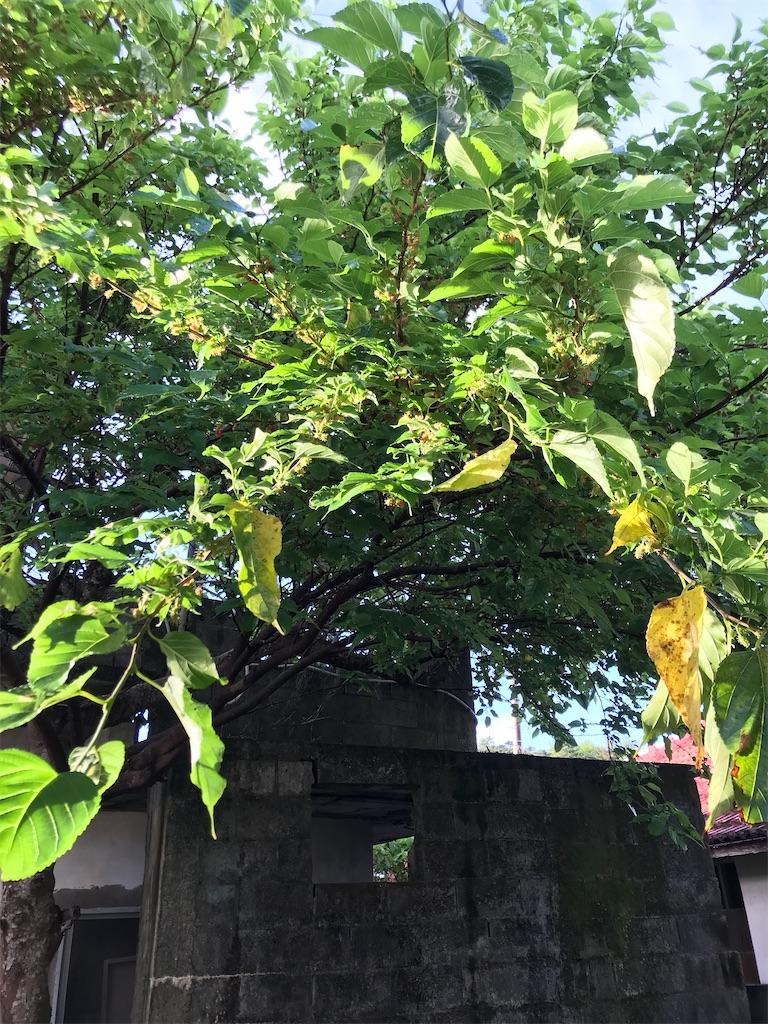 f:id:yaaninju-yui35:20210815070605j:image