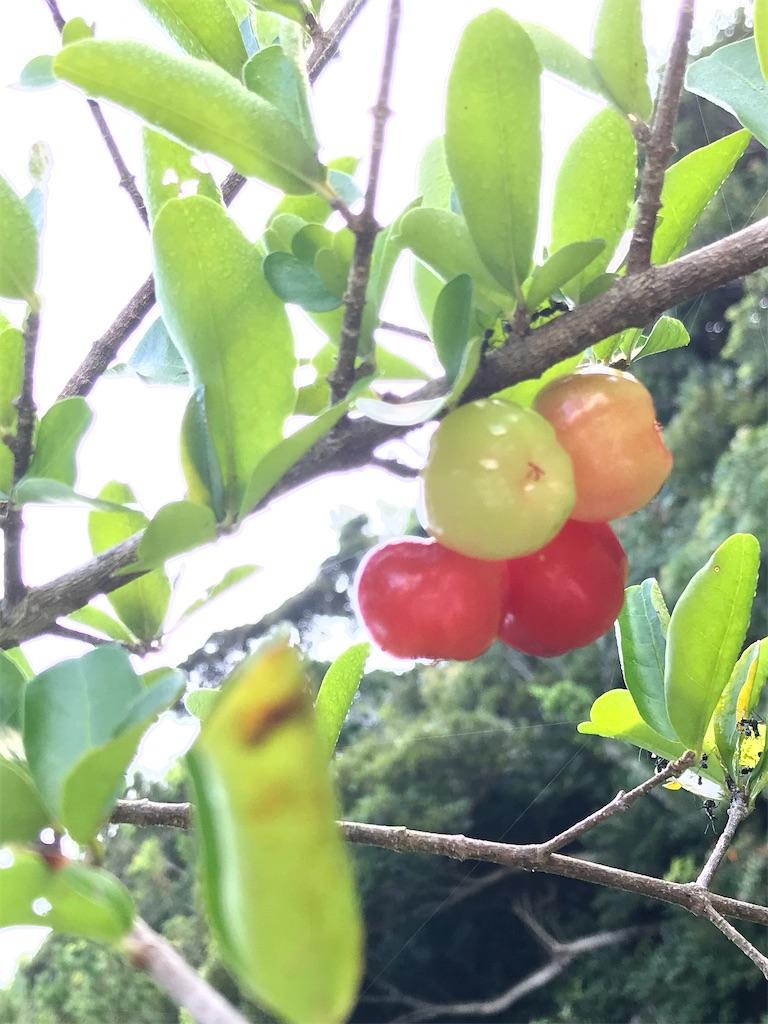 f:id:yaaninju-yui35:20210831082314j:image