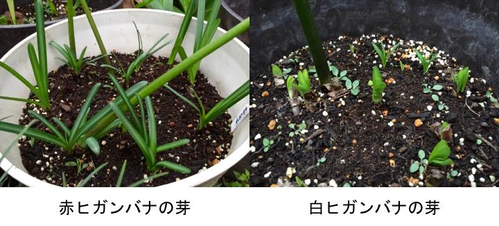 f:id:yachikusakusaki:20161012211244j:plain