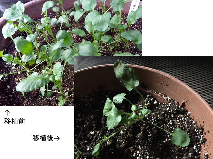 f:id:yachikusakusaki:20161019203423j:plain