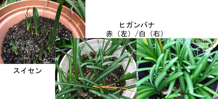 f:id:yachikusakusaki:20161024200840j:plain