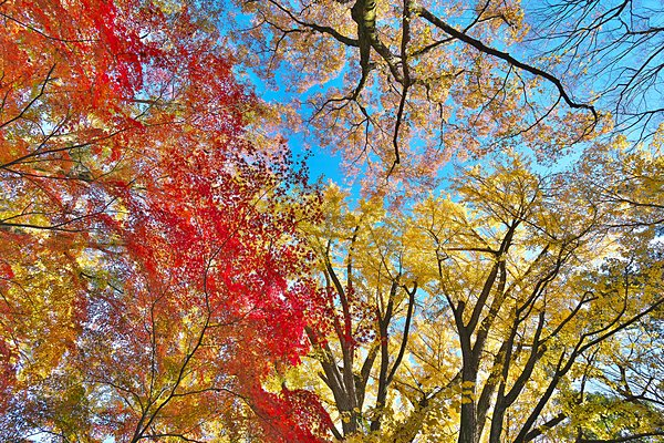 f:id:yachikusakusaki:20161102223126j:plain