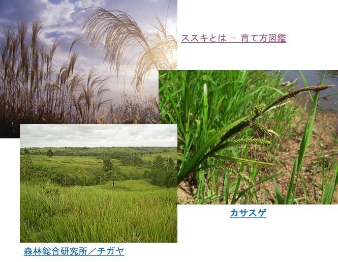 f:id:yachikusakusaki:20161109023053j:plain
