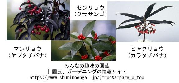 f:id:yachikusakusaki:20161110235210j:plain