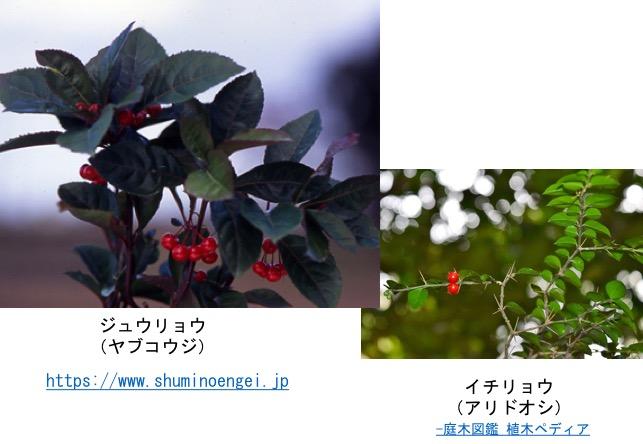 f:id:yachikusakusaki:20161111004222j:plain