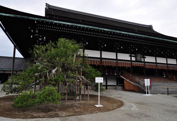 f:id:yachikusakusaki:20161116005034j:plain