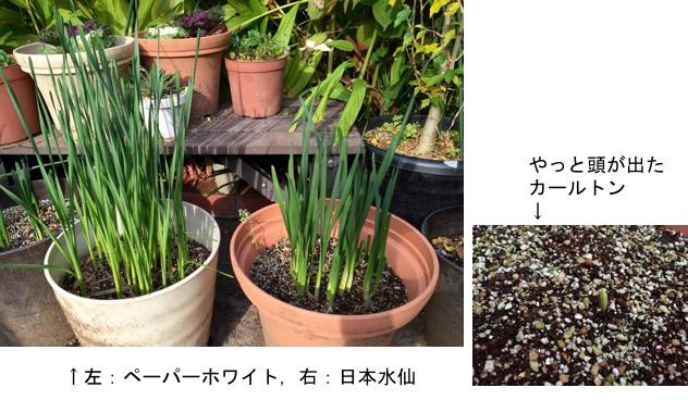 f:id:yachikusakusaki:20161117224311j:plain