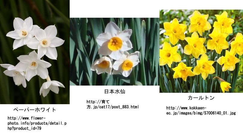 f:id:yachikusakusaki:20161118013053j:plain