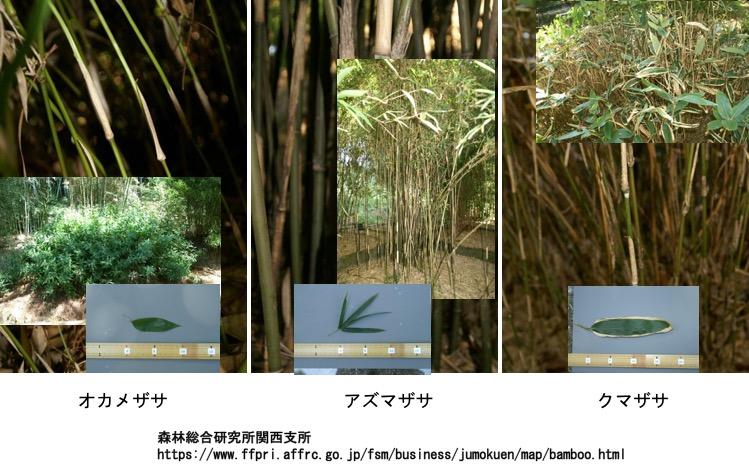 f:id:yachikusakusaki:20161119203732j:plain