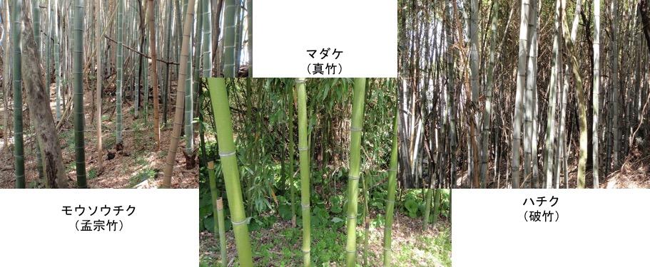 f:id:yachikusakusaki:20161119203757j:plain