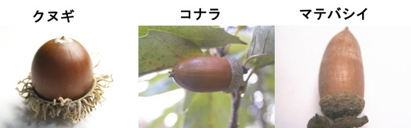 f:id:yachikusakusaki:20161121212319j:plain