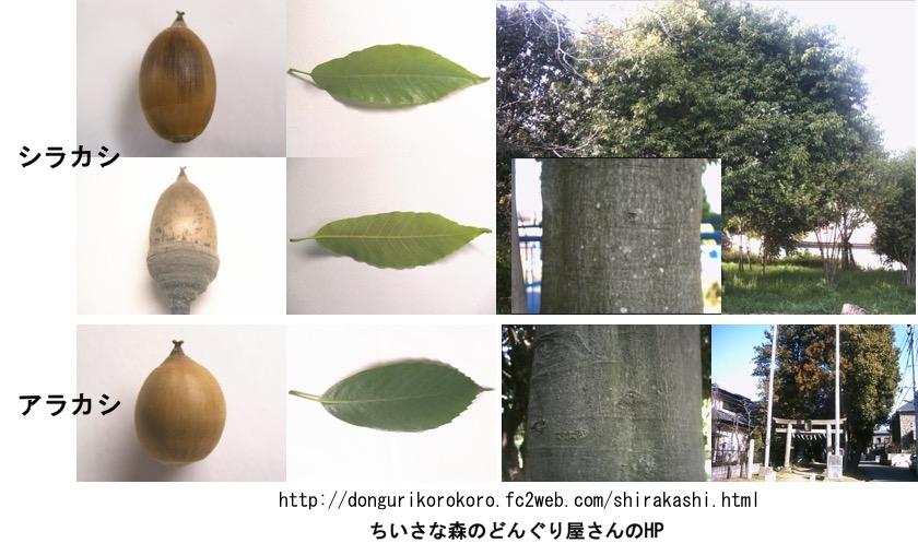 f:id:yachikusakusaki:20161121220802j:plain