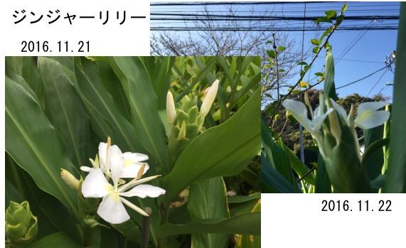f:id:yachikusakusaki:20161122210853j:plain