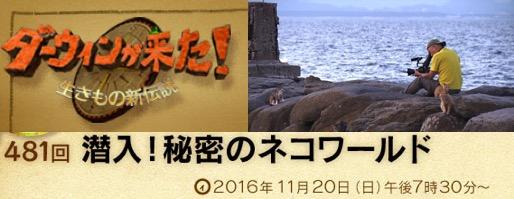 f:id:yachikusakusaki:20161123161638j:plain