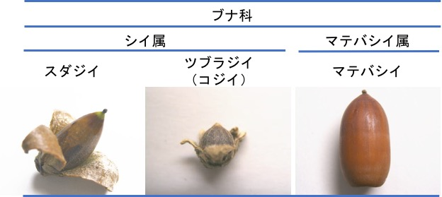 f:id:yachikusakusaki:20161126005106j:plain