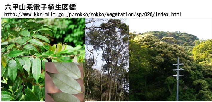 f:id:yachikusakusaki:20161126010608j:plain