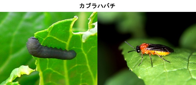 f:id:yachikusakusaki:20161201222710j:plain