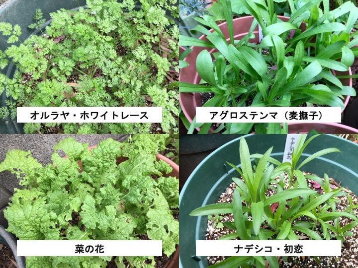f:id:yachikusakusaki:20161212213853j:plain