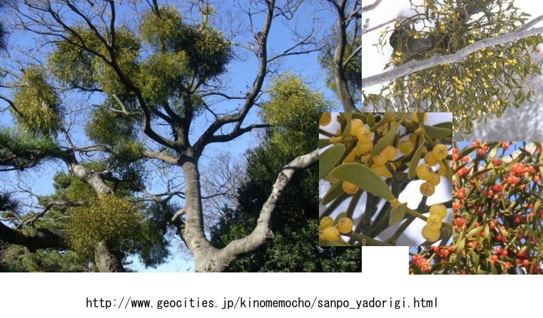 f:id:yachikusakusaki:20161221021408j:plain