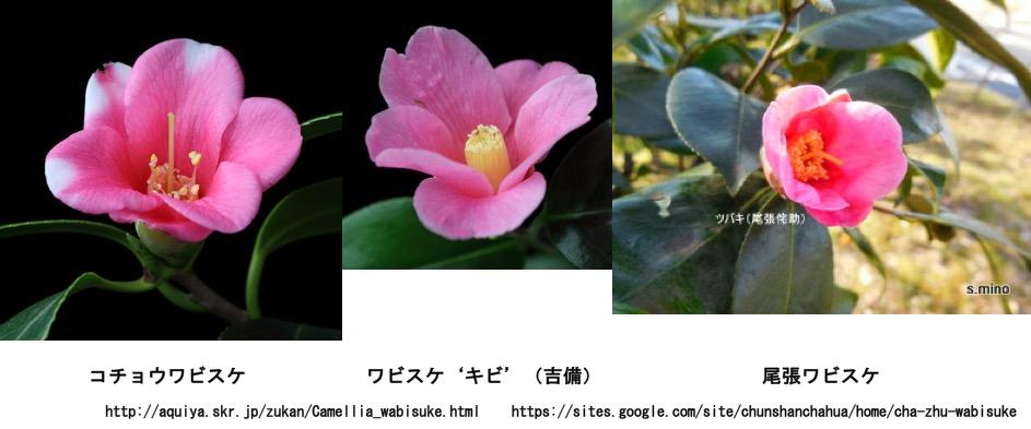 f:id:yachikusakusaki:20161223003331j:plain