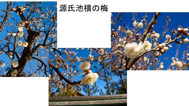 f:id:yachikusakusaki:20170105224957j:plain