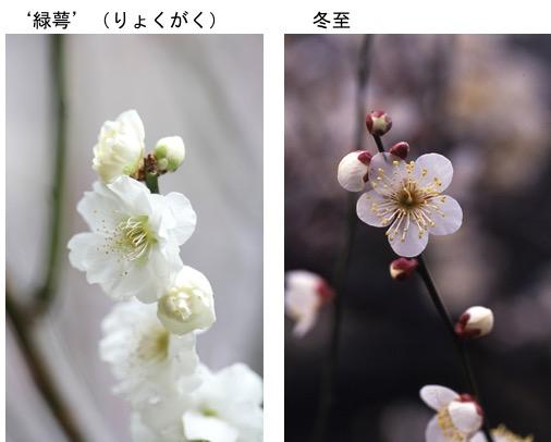 f:id:yachikusakusaki:20170108144738j:plain
