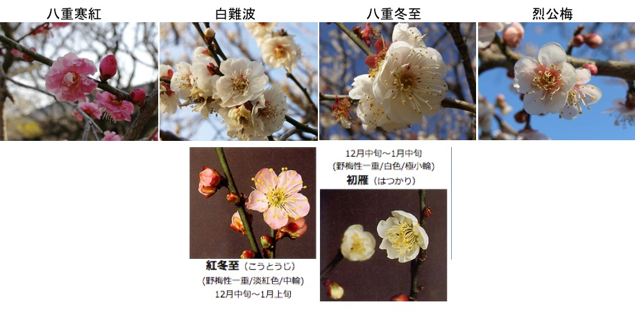 f:id:yachikusakusaki:20170108144753j:plain