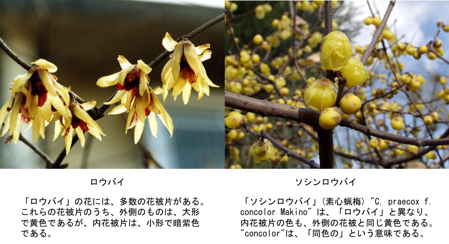 f:id:yachikusakusaki:20170112182730j:plain