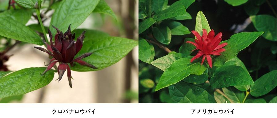 f:id:yachikusakusaki:20170112204110j:plain
