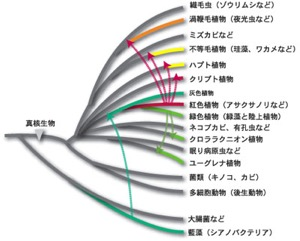 f:id:yachikusakusaki:20170119010126j:plain