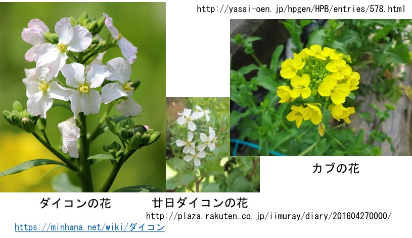 f:id:yachikusakusaki:20170123212753j:plain