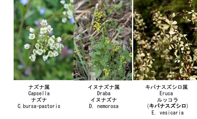 f:id:yachikusakusaki:20170125182611j:plain