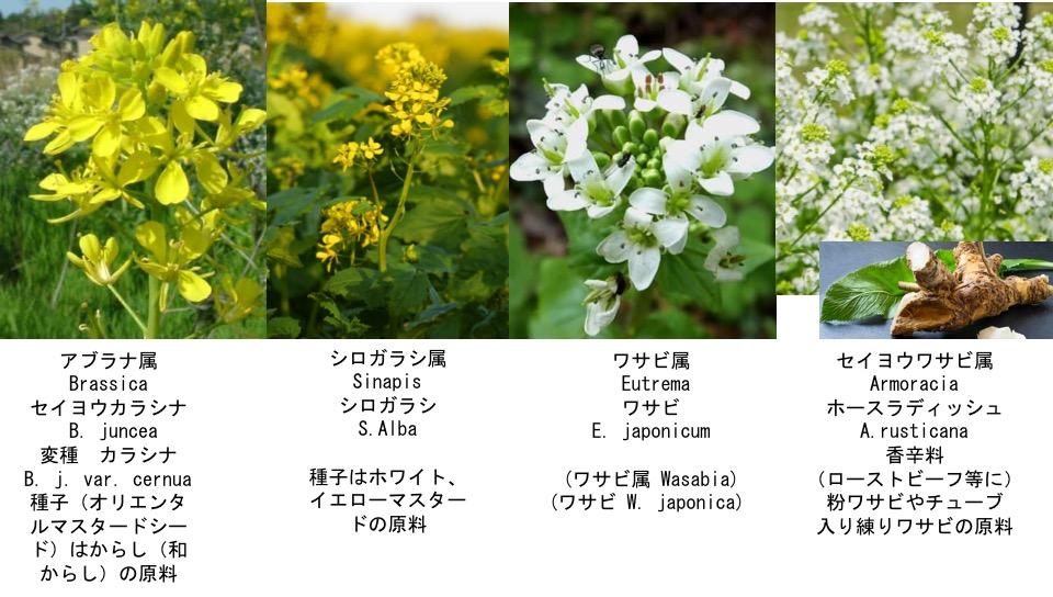 f:id:yachikusakusaki:20170125182653j:plain