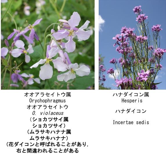 f:id:yachikusakusaki:20170125182744j:plain