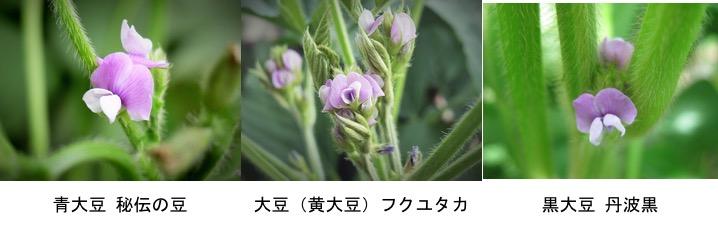 f:id:yachikusakusaki:20170130212016j:plain