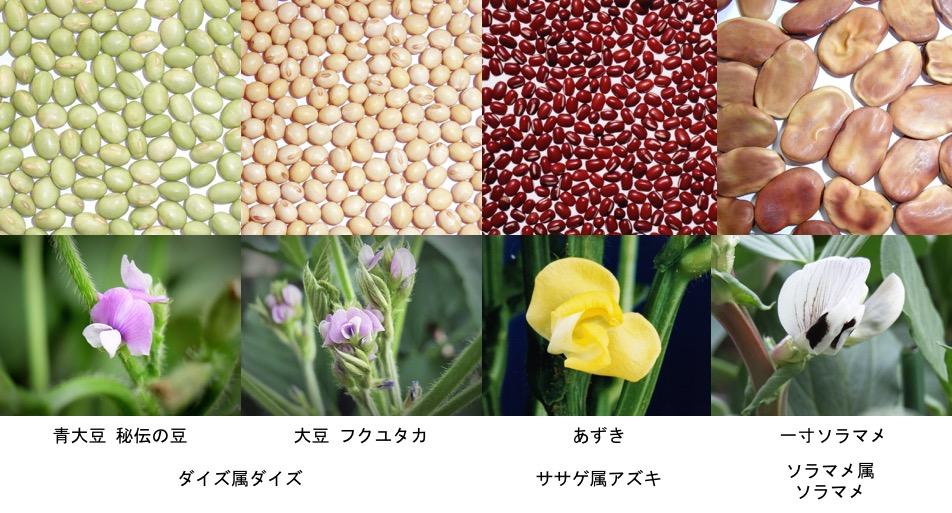 f:id:yachikusakusaki:20170130212117j:plain
