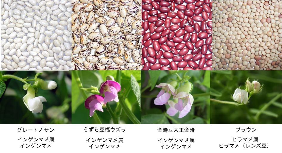 f:id:yachikusakusaki:20170130212134j:plain