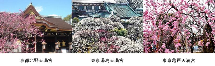 f:id:yachikusakusaki:20170210210518j:plain
