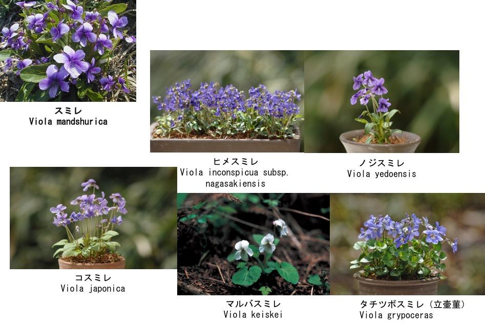 f:id:yachikusakusaki:20170217000343j:plain