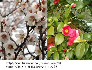f:id:yachikusakusaki:20170219220625j:plain