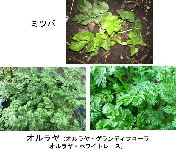 f:id:yachikusakusaki:20170228010017j:plain