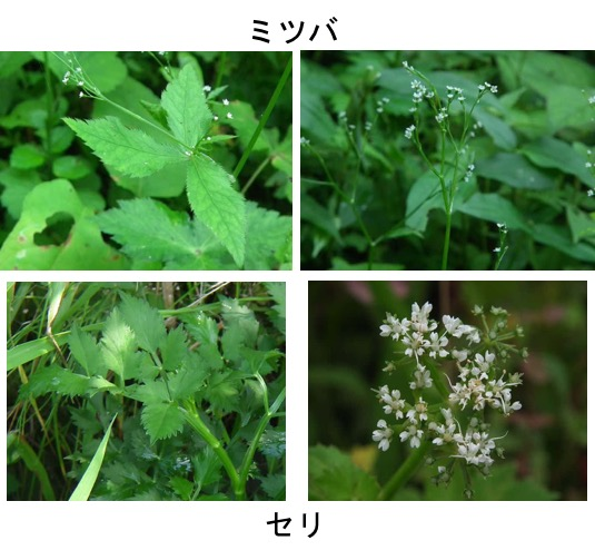 f:id:yachikusakusaki:20170228010253j:plain