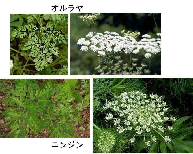 f:id:yachikusakusaki:20170228012833j:plain