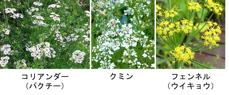 f:id:yachikusakusaki:20170228032438j:plain