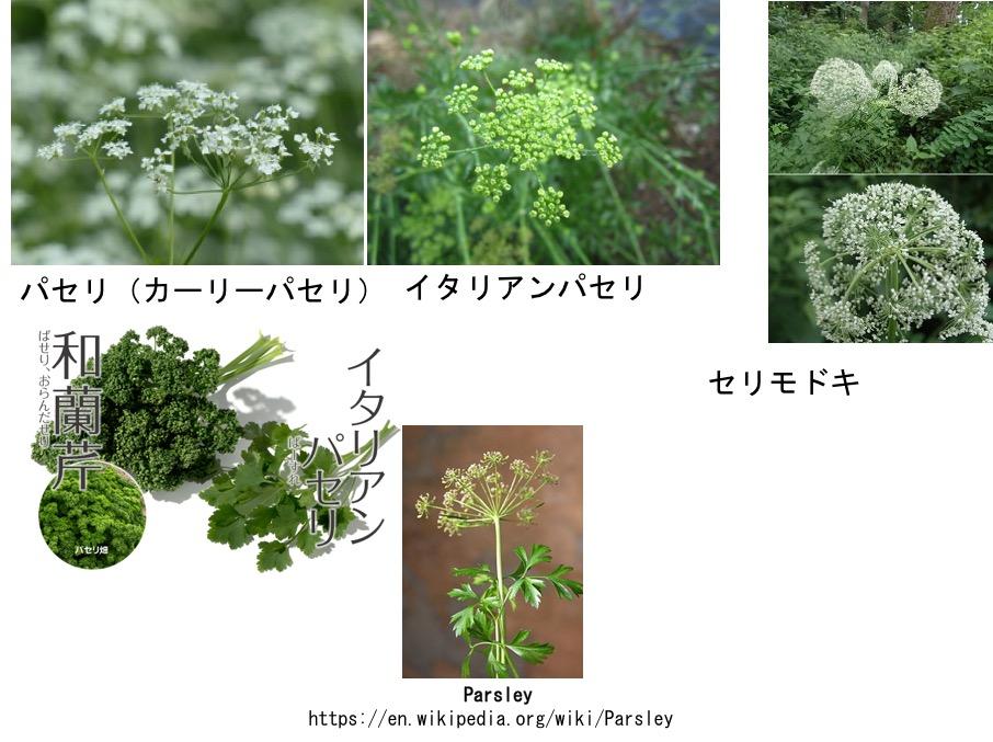 f:id:yachikusakusaki:20170301013731j:plain