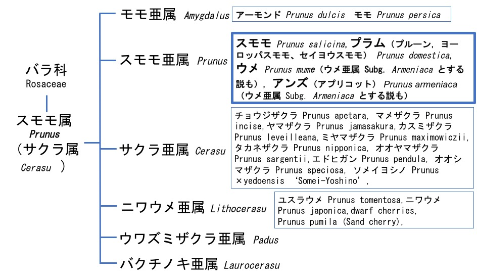 f:id:yachikusakusaki:20170305224906j:plain