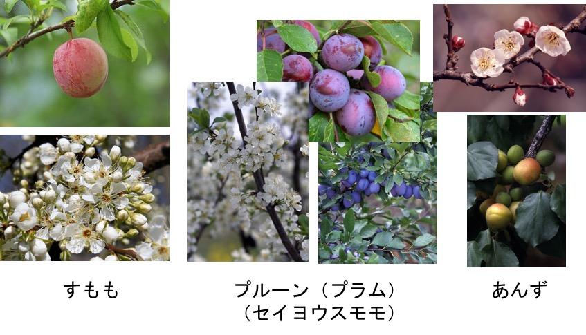 f:id:yachikusakusaki:20170305225736j:plain