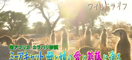 f:id:yachikusakusaki:20170306232519j:plain